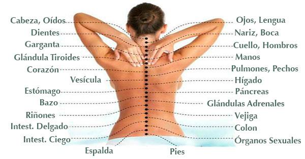 La causa del dolor: cómo la columna está conectada con los órganos